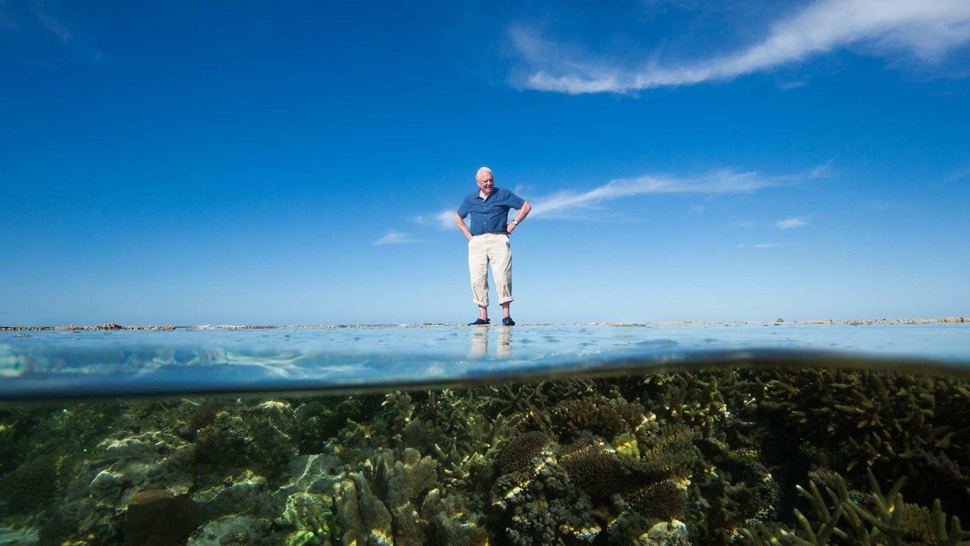 David Attenborough's Great Barrier Reef Dive VR