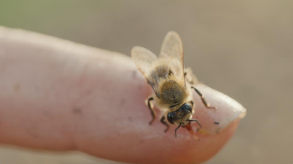 Enterprise Bees